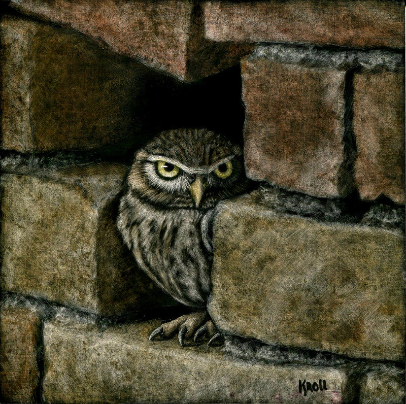 Little Owl scratchboard