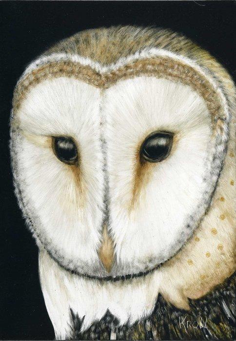 Barn Owl scratchboard