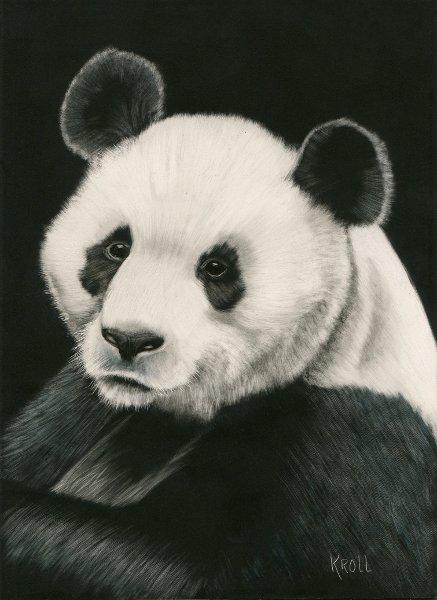Panda scratchboard