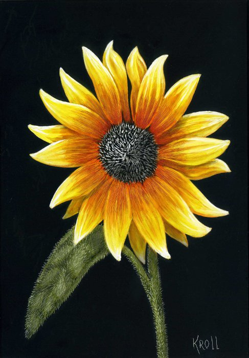 Yellow Sunflower scratchboard