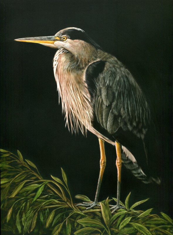 Sunset - Great Blue Heron scratchboard